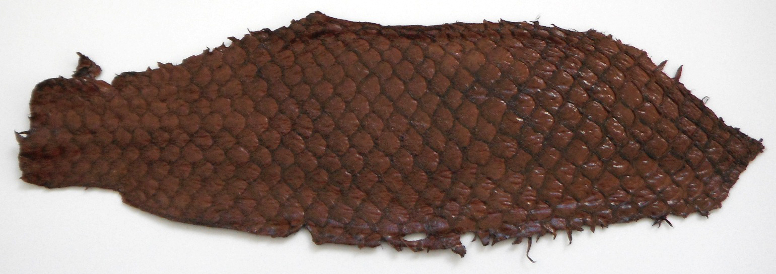 Eco friendly handmade soft suede Brown  Tilapia Fish Skin Leathe