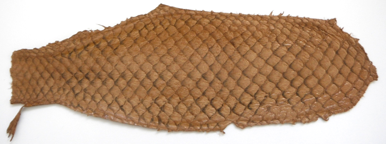 Eco friendly handmade soft suede Old Gold  Tilapia Fish Skin Lea